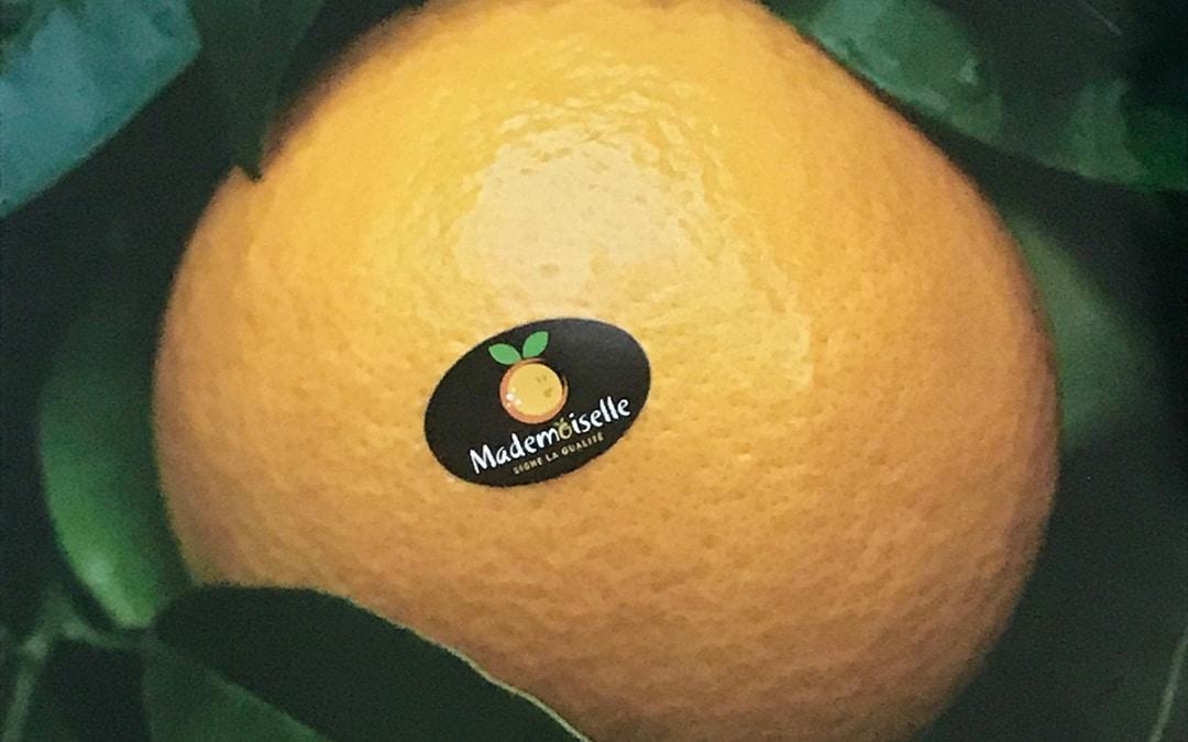 orange mademoiselle agrumes