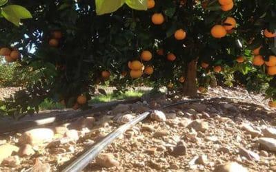 La préservation des ressources en eau chez Fontestad