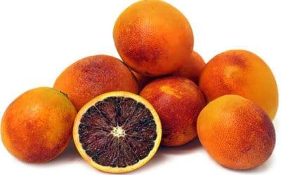 La saison de l'orange Sanguinelli est lancée !